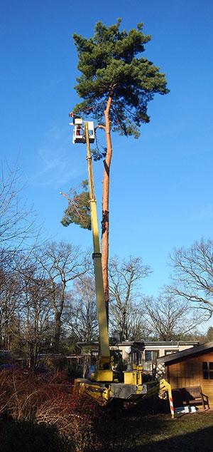 Hebebühne Baumdienst Schöneiche